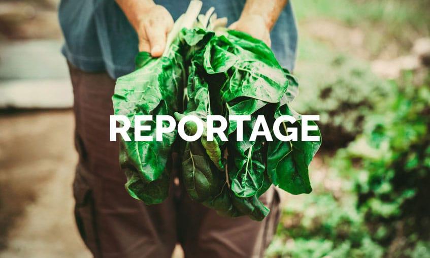 Reportage zu Ernährung und Gesundheit