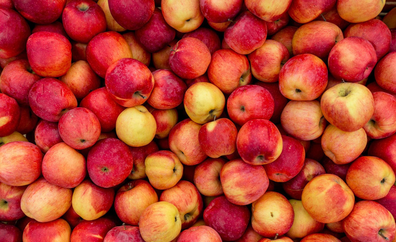 Äpfel essen trotz Apfelallergie